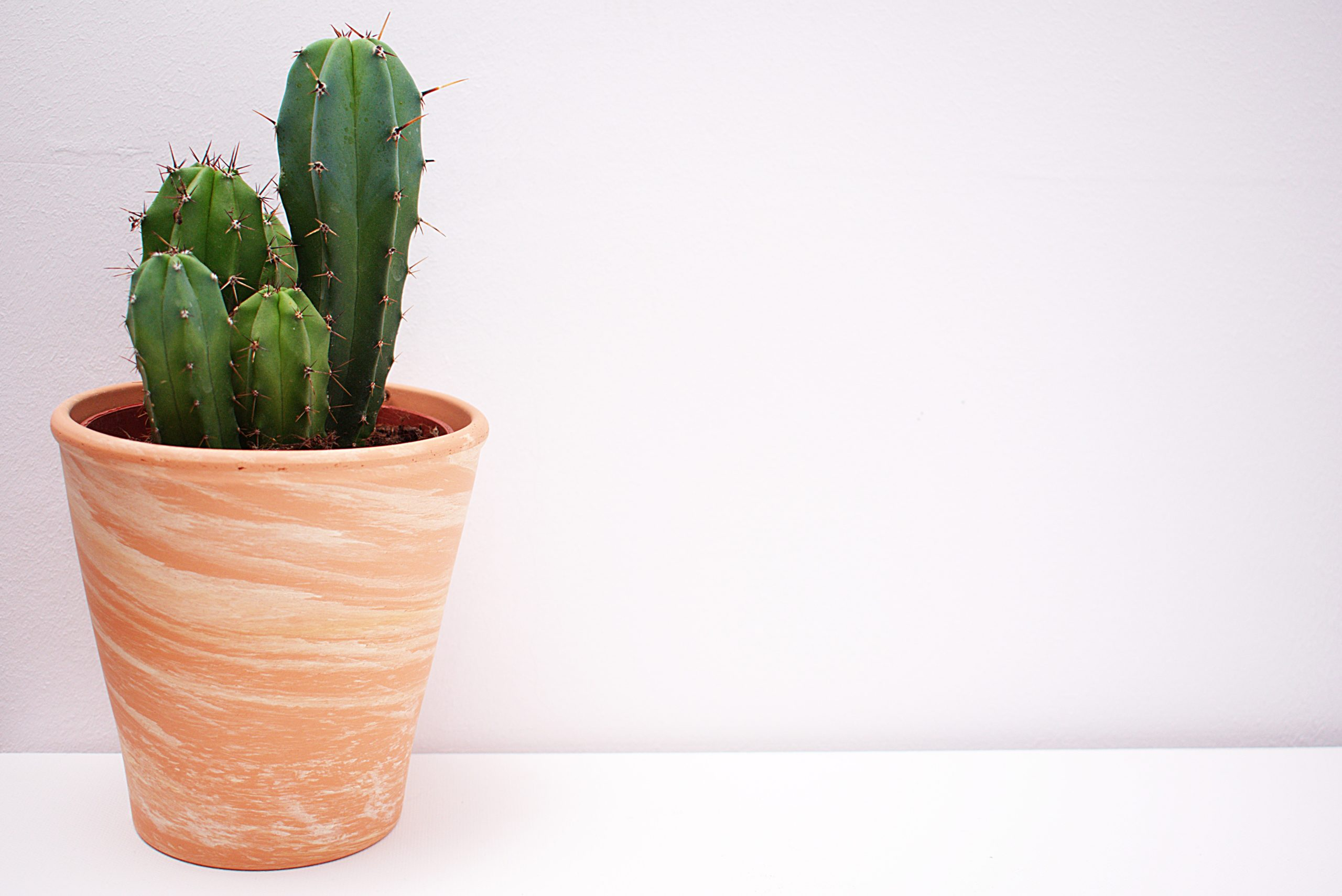 A cactus in a vase on a table